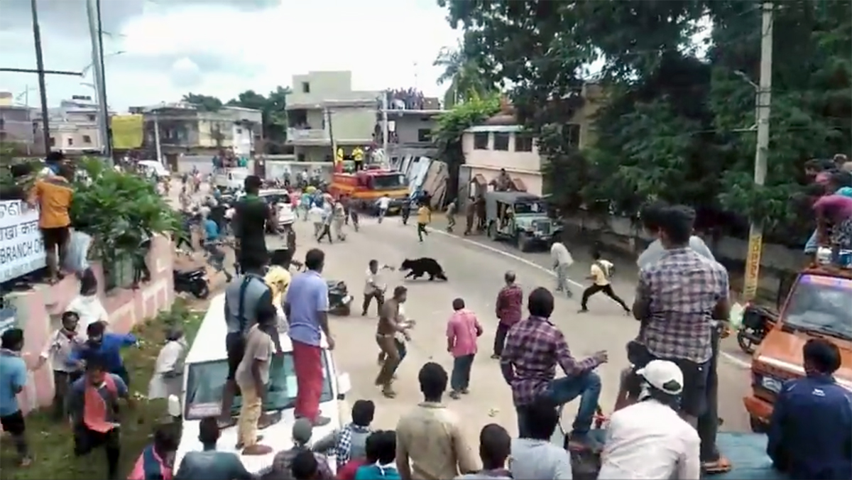 A sloth bear in a human-dominated area in Kalahandi district, Odisha. Screengrab from Himanshu Palei.