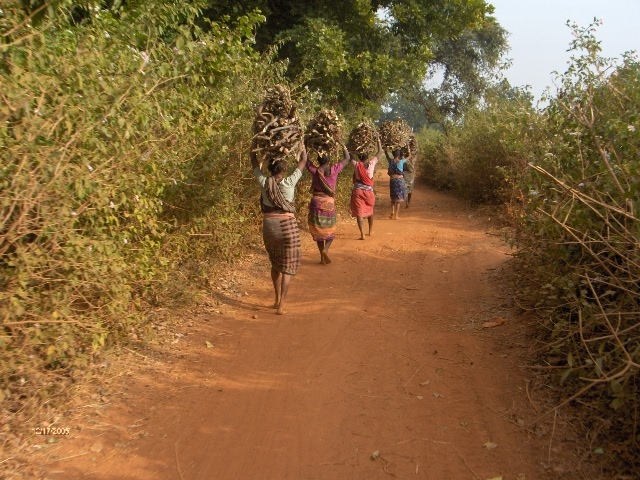 Tribal women taking firewood for cooking. Photo by Chandan Singh/Flickr.