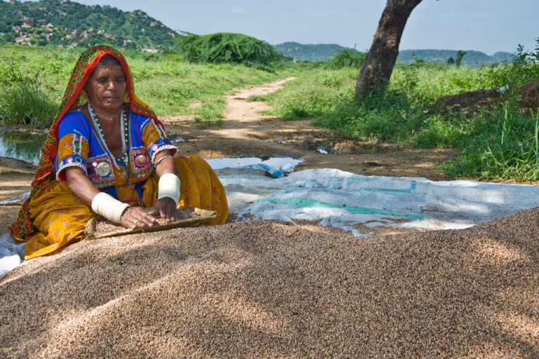 A tribal woman cleaning grains in Andhra Pradesh. Photo by ICRISAT/Flickr.