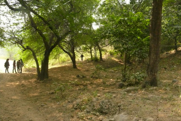 Mangar Bani, possibly the last remnant of native deciduous forest in Delhi NCR, where regeneration of several tree species has become highly limited Photo by by Ghazala Shahabuddin