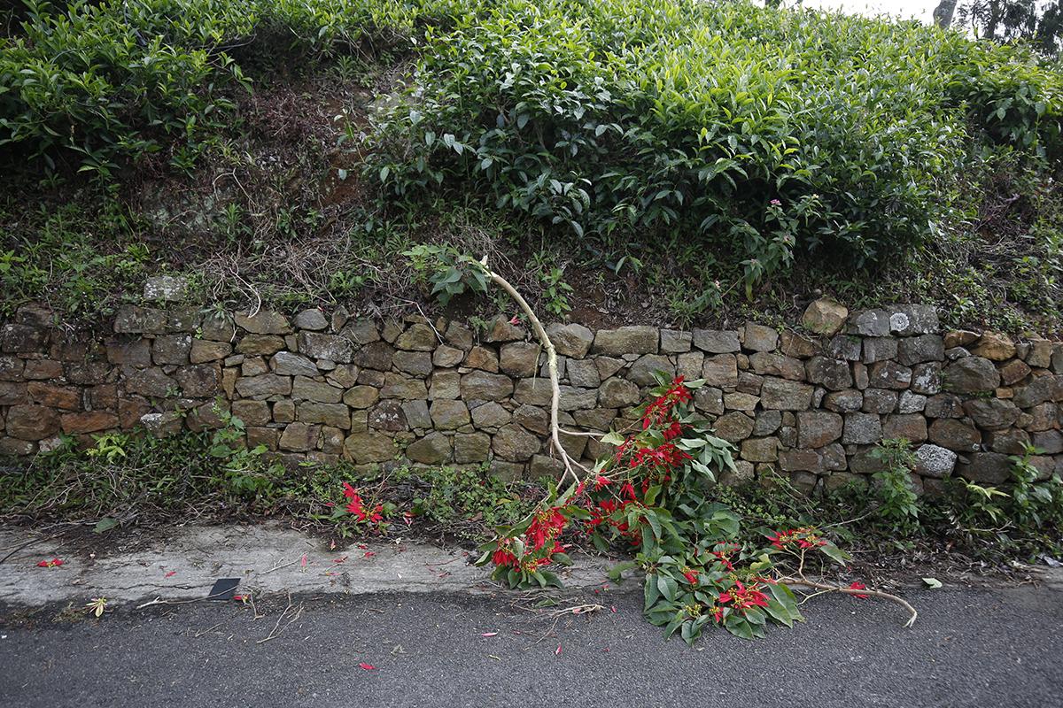 plant destoryed by gaur in coonoor
