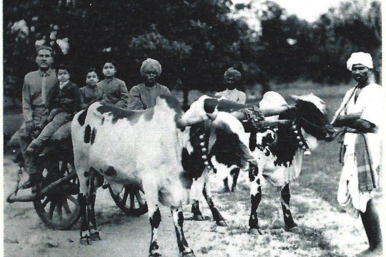 Bullock cart being readied for hunting in Kolapuram in 1922. Photo by Aditya Laxma Rao.