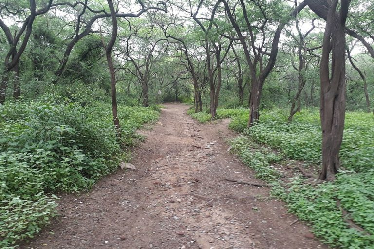 The study found that the area under forest cover in Delhi has reduced in the last 20 years. Photo by Pinakpani/Wikimedia Commons.
