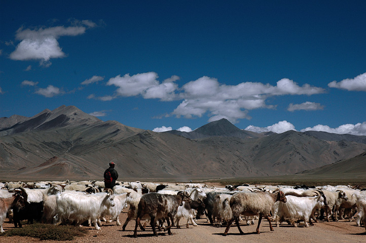 Shepherds in Ladakh. People who depend on nature-based livelihoods and predators share landscapes in the Indian trans-Himalayas. Photo by Koshy Koshy/Flickr.