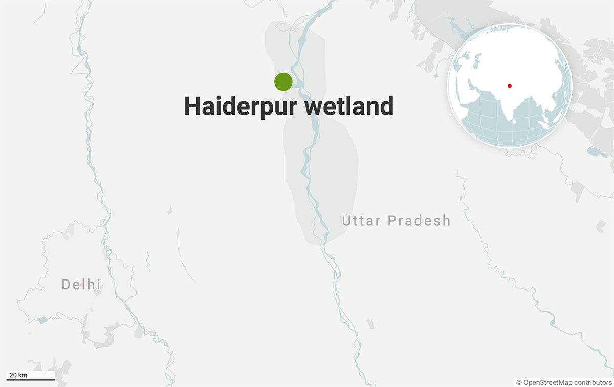 The Haiderpur wetland, part of the Hastinapur Wildlife Sanctuary, stretches across Muzaffarnagar and Bijnour districts. Map from Datawrapper.
