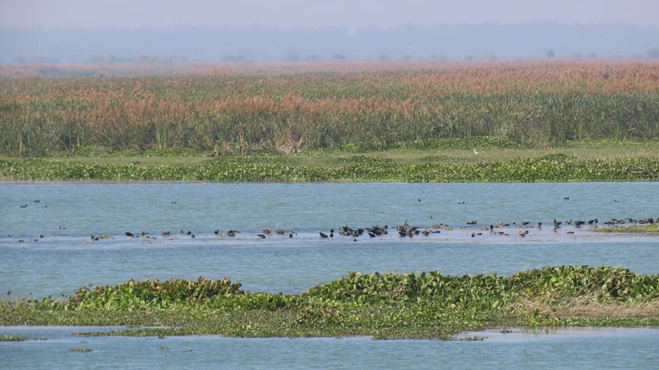 The Haiderpur wetland stretches across 3,000 acres in Uttar Pradesh. It provides shelter to many wildlife species, helps in flood control, and supports livelihoods among several ecosystem services. Photo by Ashish Loya.