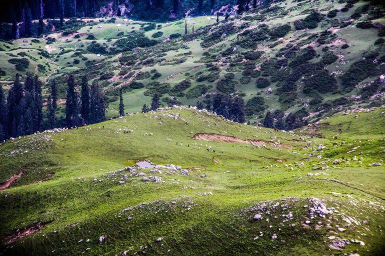 Grazing sheep on the vast pasture of HinduKush⠀ Taken in Hindu Kush Range, Lalko valley in Swat district, Pakistan⠀ Photo: Fazal Khaliq.
