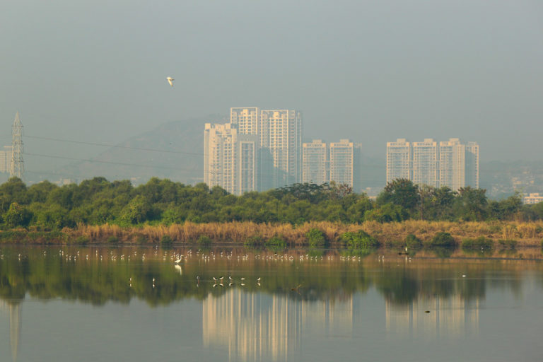 Birds in a wetland near Bhandup Pumping Station. Photo by Elroy Serrao/Flickr.