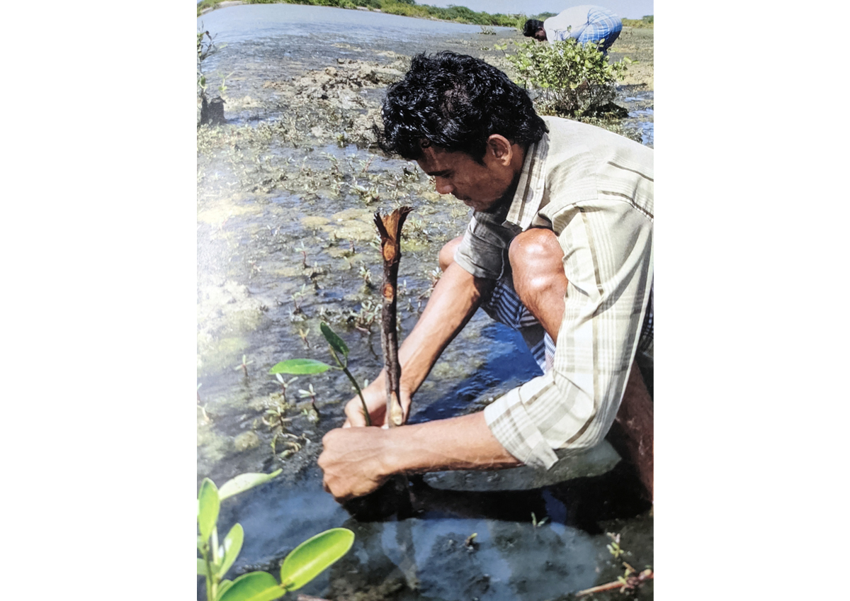 A local community member around Pulicat Lake plants a mangrove sapling. Photo from Meerasa.