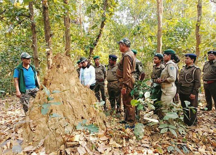Sasmita Lenka and team inspecting pangolin habitats in Athagarh forests. Photo from Sasmita Lenka.
