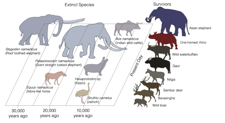 The Indian subcontinent experienced a low magnitude megafaunal extinction event approximately 30,000 years after the arrival of Homo sapiens in the region. Image from Advait Jukar.