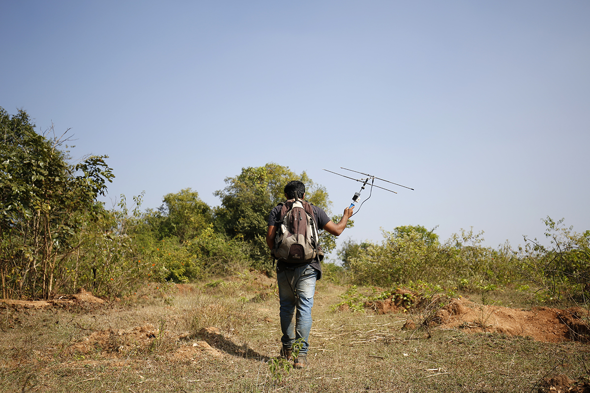 Vivek Philip Cyriac, a researcher tracks Russell's vipers fitted with radio transmitters in Chowdikatte village. Photo by Abhishek N. Chinnappa.
