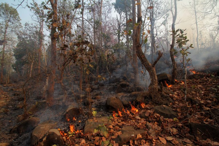 Leaf litters burning in a forest in Gudgudia gram panchayat, a CFR area, inside the STR. The timely intervention by the villagers stopped the spread of the inferno. Photo by Special Arrangement.