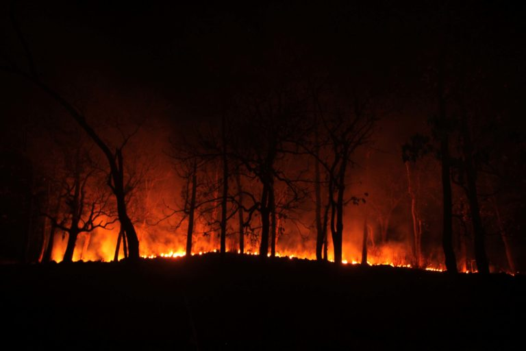 The forest near Jashipur in the buffer area of STR on fire. Photo by Pragati Prava.