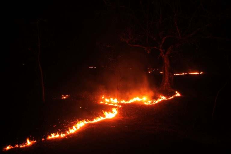 Wildfire engulfed the forest in the buffer area of the Similipal Tiger Reserve near Karanjia in the first week of March. Photo by Special Arrangement.