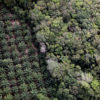 India's growing demand for palm oil is linked to large scale deforestation for oil palm agriculture in Indonesia and Malaysia.