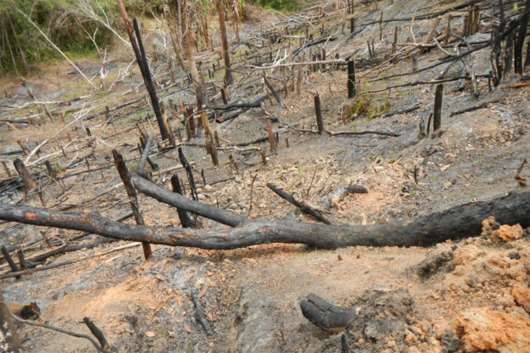 Evidence of slash and burn agriculture in a mid-altitude forest close to Andrafainkona in the Sorata region.
