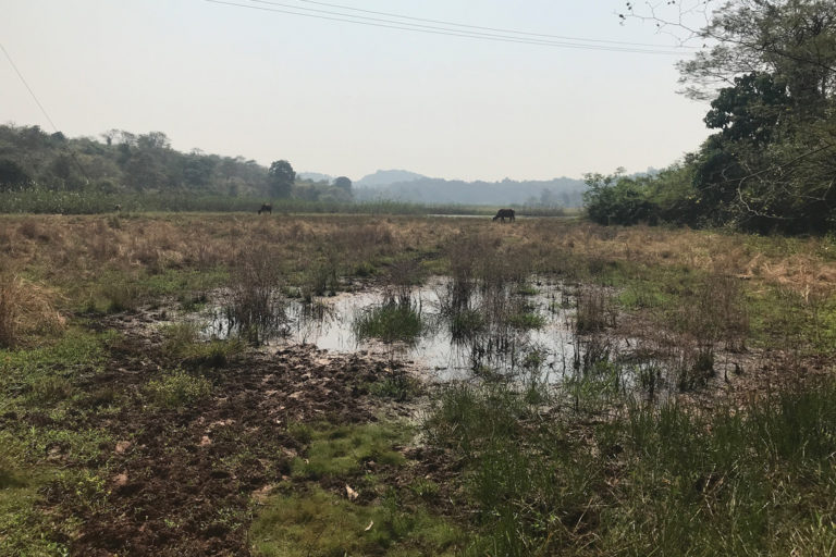 Silted paddy field