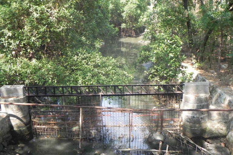 Mangalavanam bird sanctuary with feeder canal containing sewage. Photo by Jenish V. Thomas.