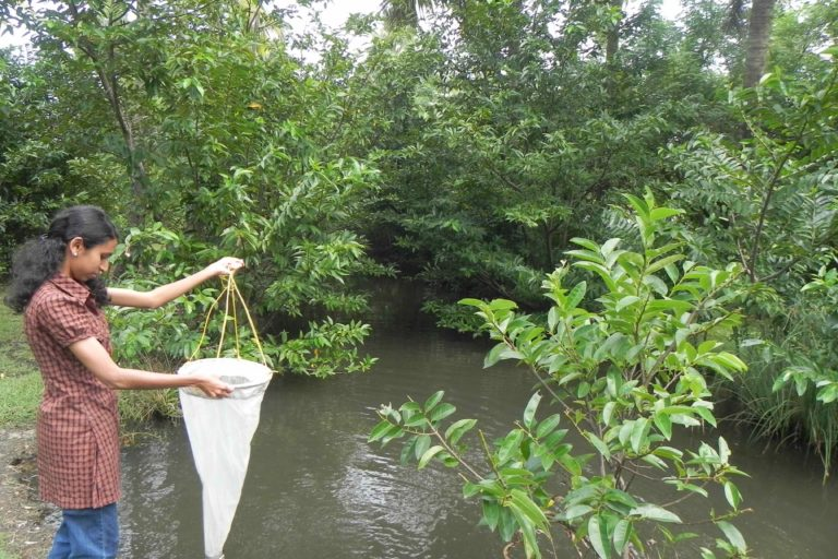 Rani Varghese, a Kochi native, works out the mangroves carbon sequestration potential. Photo by Hari Praved.