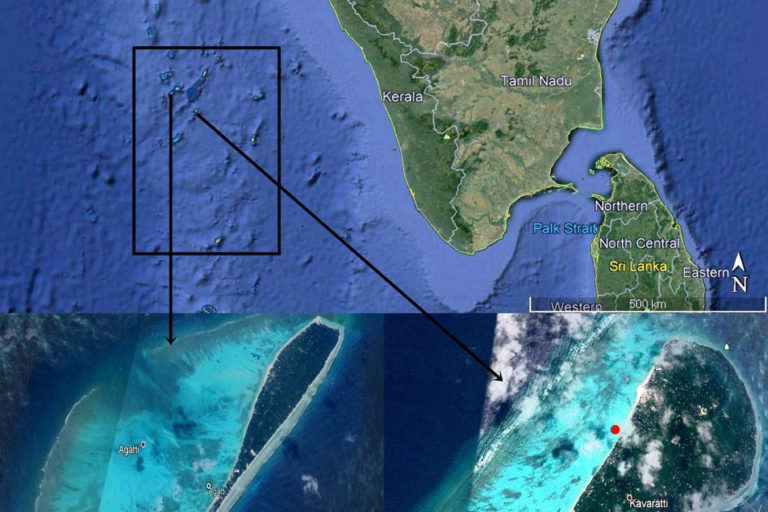 Lakshadweep group of islands (black rectangle) near west coast of southern India; Agatti Island on the bottom left; Kavaratti Island on the bottom right. Collection sites of Bulaceros newcannorum sp. nov. – red dots; collection site of Bulaceros porcellanus – yellow dot. Photo from the Centre for Marine Living Resources and Ecology (CMLRE).