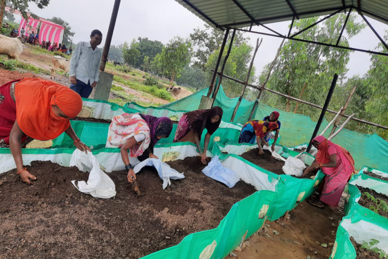 Self-help groups (SHGs) were to be roped in to prepare vermicompost and other products from the cow dung purchased under the scheme. 95,680 quintal vermicompost has been prepared across the state so far. Photo- DPR Chhattisgarh