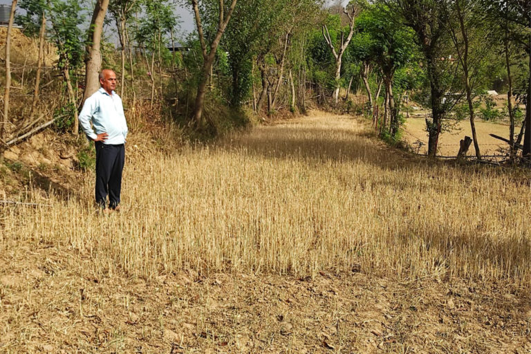 Farmer Madan Lal in his dried up fields at village Bagtheru, Bilaspur District. Photo by Special Arrangement.