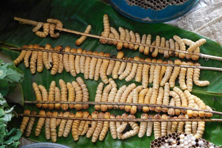 Beetle grubs ready to be roasted. Photo by Ajano Tsanglao.