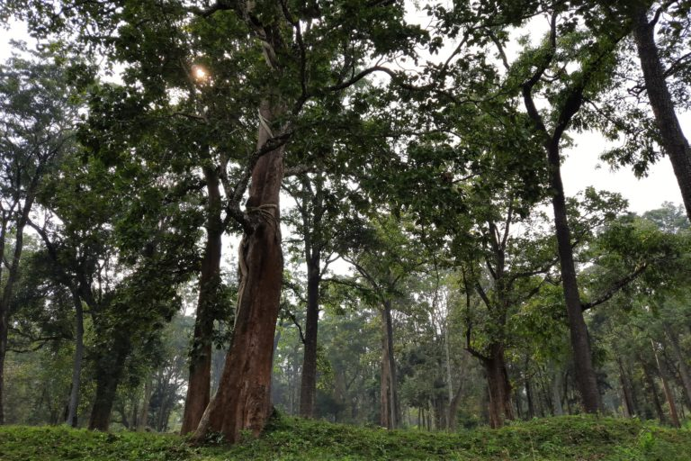 Evergreen forests are the habitat of the bark scorpions. Photo by Shubhankar Deshpande.