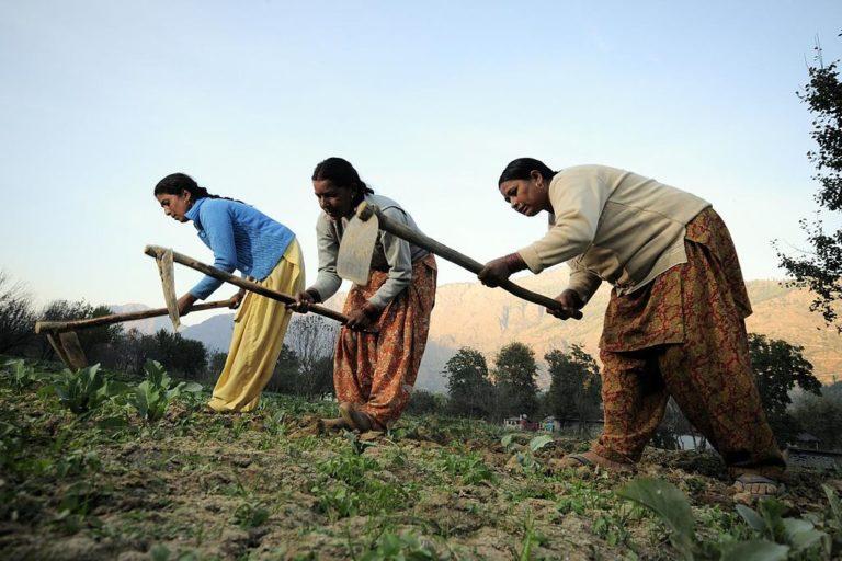 Women farmers at work in their vegetable plots near Kullu town, Himachal Pradesh, India. Photo by CIAT - NP Himachal Pradesh 68/Wikimedia Commons.