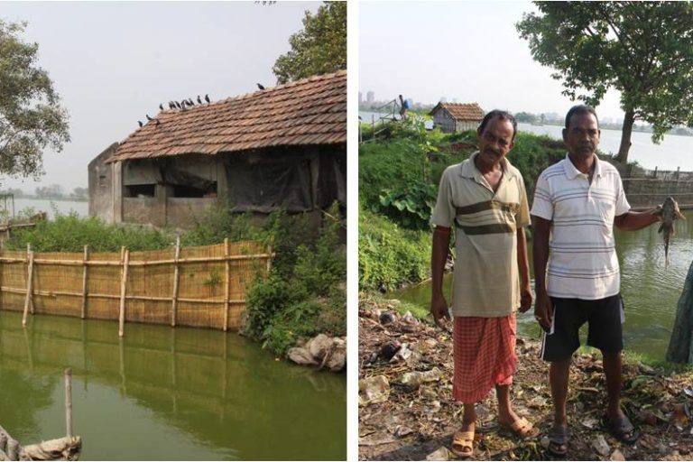 Traditional physical barrier in use at East Kolkata Wetland to minimise the intrusion of Pterygoplichthys in the pisciculture bheries (ponds) from sewage feeder channel. Photo by Ajmal Hussan.