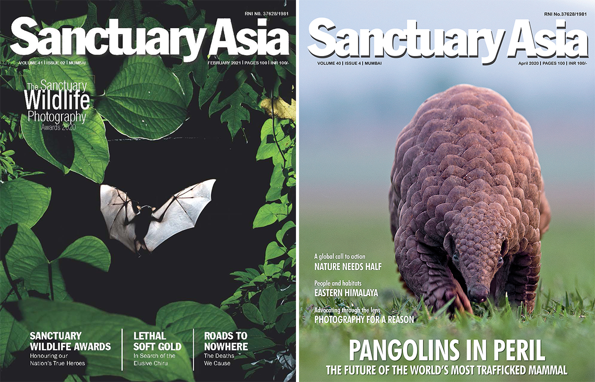 February 2021 and April 2020 edition of Sanctuary Asia magazine. Covers from Sanctuary Asia.