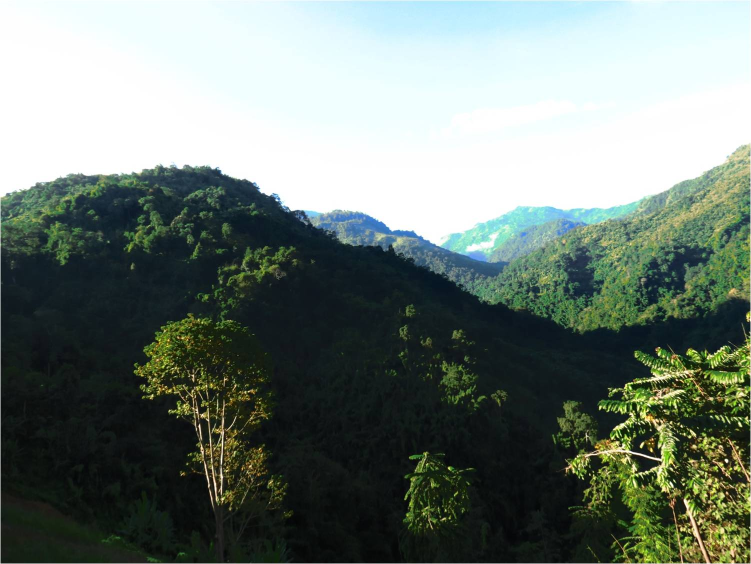 Forests of the Yaongyimchen Community Biodiversity Conservation Area (YCBCA) set aside by the community for conservation. Photo by Nuklu Phom.