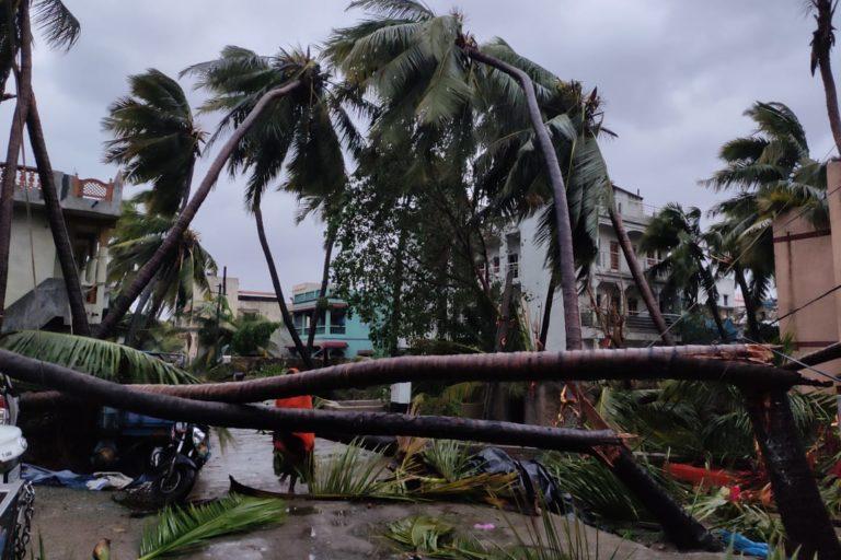Fallen trees in Diu. Photo by Sunil Vaishya.