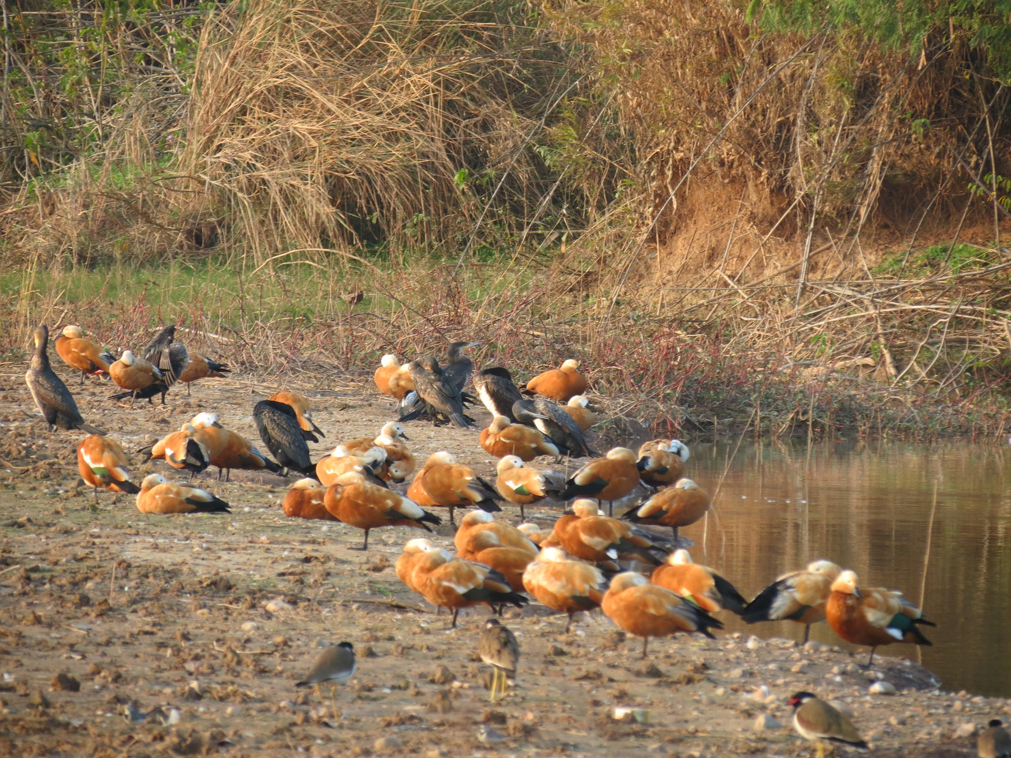 Winters see the arrival of many migratory species