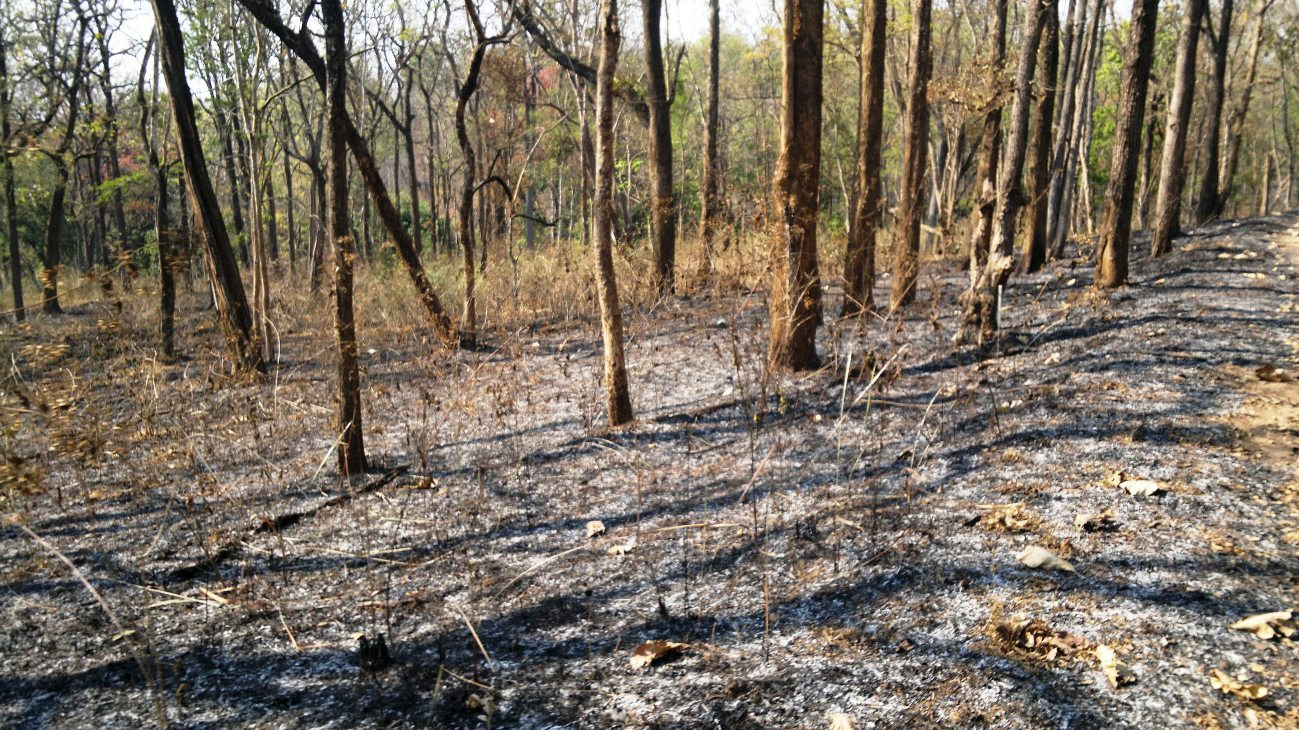 Forest Fire at Wayanad Wildlife Sanctuary, Muthanga Range, in 2012. Experts believe that fuel load in forests such as shrubs, dead trees, ground litter can ignite, grow and intensify the forest fire. Photo by Jaseem Hamza/Wikimedia Commons.