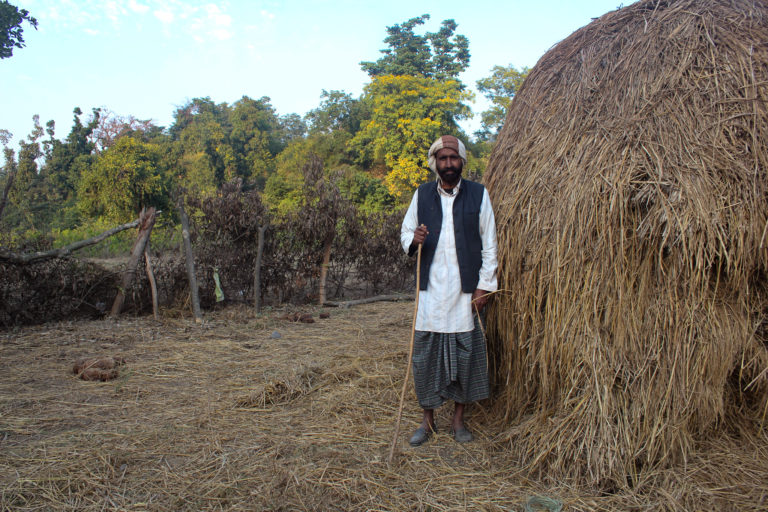 Gulam Rasul, a Van Gujjar stands by his purhal or purchased haystack, strewn over by an elephant. Elephant dung can be seen laying to his left. He is nonchalant as they do not cause excessive damage. Yet, the fact that he is a Van Gujjar, leaves him hanging with an uncertain future. Image credit: Radhika Gupta