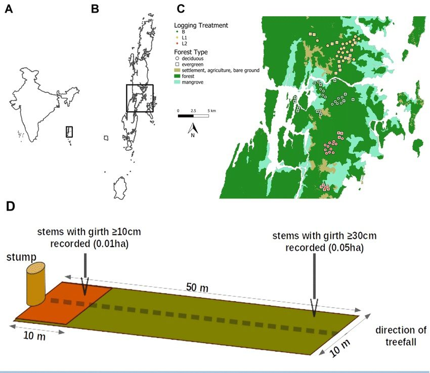 The study was conducted in the Andaman Islands, India (A, B). The scientists placed plots in the central archipelago, on near-contiguous islands in Middle Andaman and Baratang forest division (C: map prepared using National Remote Sensing Centre's (NRSC) Bhuvan Land-use land-cover data, 2015).Each plot (D) consisted of two nested plots that began at a logging stump and was aligned in the direction of treefall. Within each sub-plot, stems above plot-specific girth cut-offs were identified and measured. Photo from Surendra et. al.