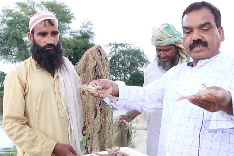 Farmers culturing shrimp in Uttar Pradesh. Photo by Fisheries Department, Uttar Pradesh.
