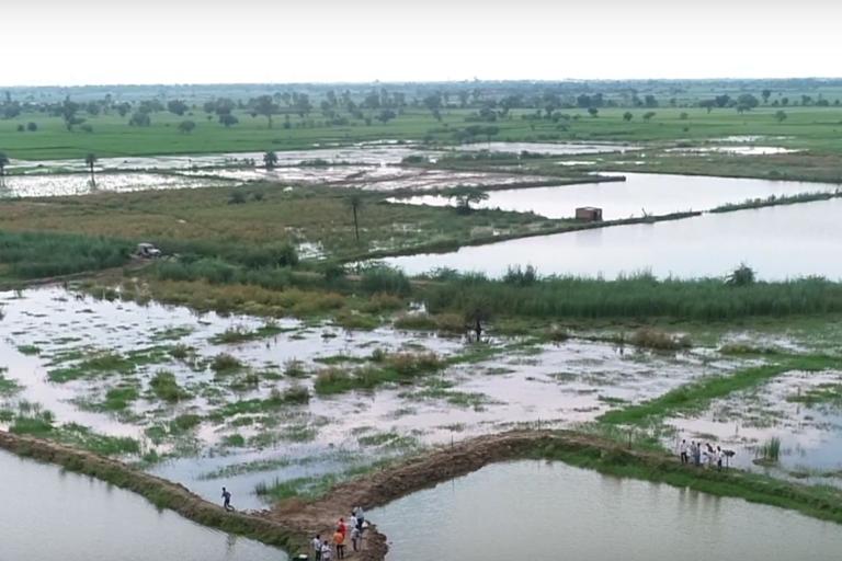 Land being used for culturing shrimp in Uttar Pradesh. Photo by Fisheries Department, Uttar Pradesh.