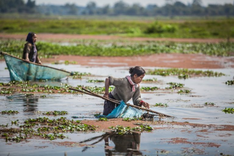 Women picking snails from the Maguri beel in upper Assam. Snails are found in plenty in the lake and are considered a delicacy. Photo by Jitendra Raj Bajracharya/ICIMOD.