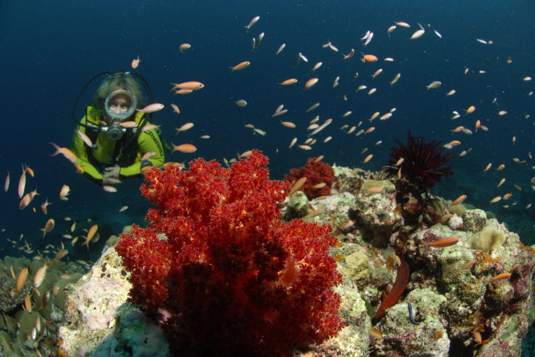 A researcher turned diver exploring the marine wealth near a coral reef in Lakshadweep. Photos by special arrangement.