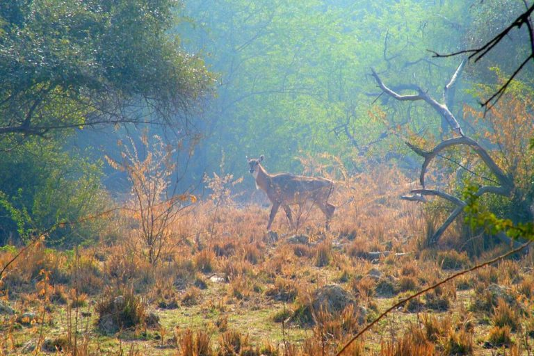 Rajasthan is the largest Indian state by area but only about 10 percent of it is covered under forests. Photo by Jonbrew/Flickr.