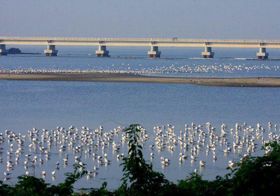 A view of the Kadalundi estuary. Photo by Vijesh Vallikkunnu.