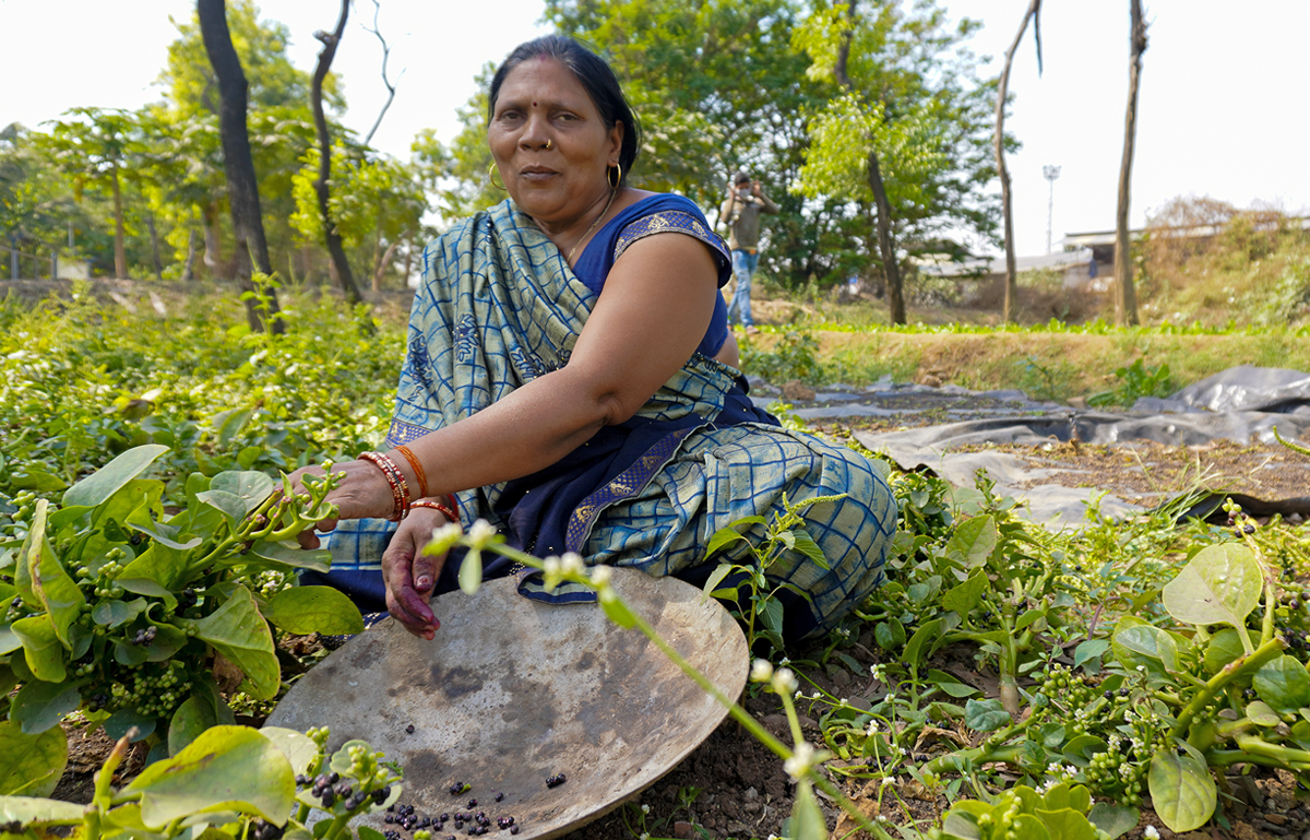 Sawan Chauhan removes Malabar spinach seeds for sowing. Chauhan and her family moved to Mumbai from Uttar Pradesh 20 years ago and have been living next to railway farms since then. She says her city-bred children do not want to go back to the village now. Photo by Geetanjali Gurlhosur.