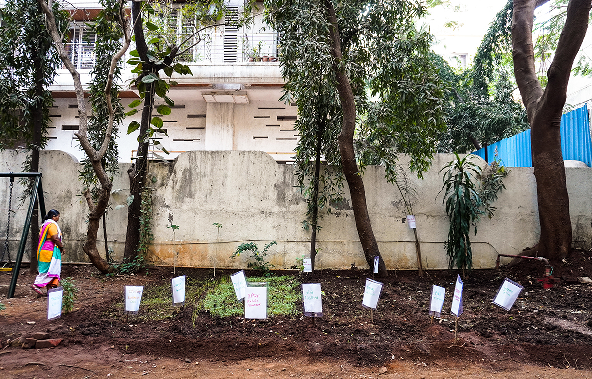 A vegetable garden inside the premises of a housing society in the eastern suburbs of Mumbai, where sanitation worker Sushila Ahire learnt to practice organic farming amidst the COVID-19 lockdown in early 2021. Photo by Prateek Pamecha.