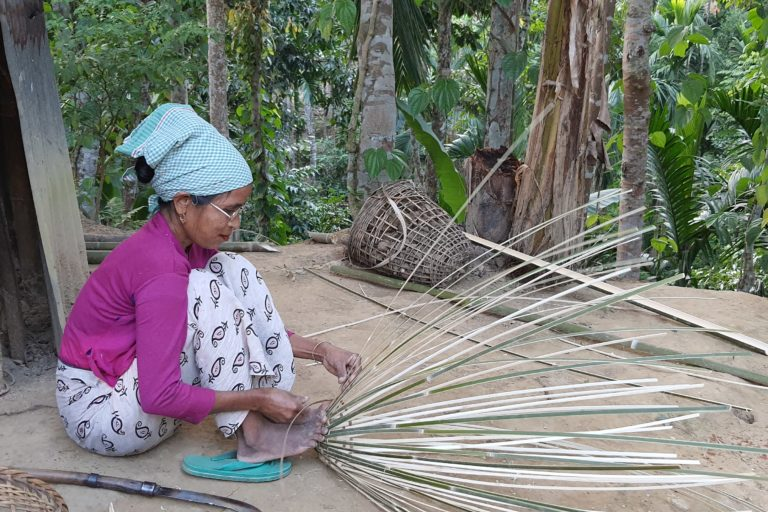 Agroforestry could play a role in reducing poverty. Photo by Animekh Hazarika.