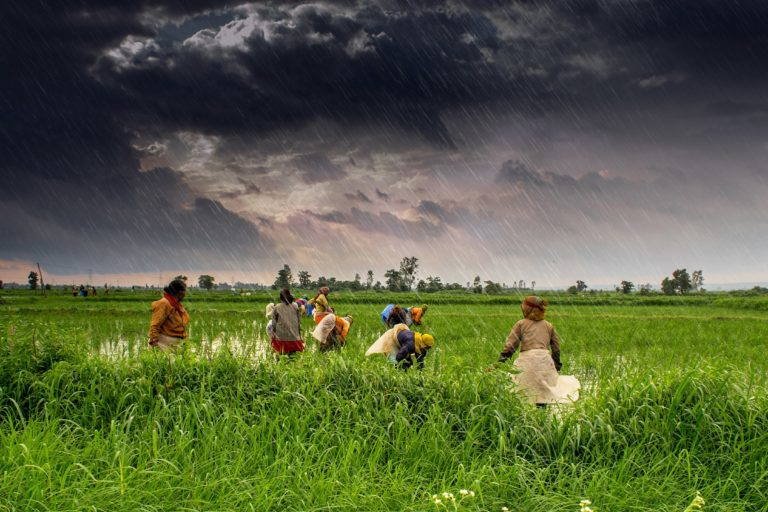 India's monsoons are important to its agriculture and economy. Farms during India's monsoon season in Madhya Pradesh. Photo by Rajarshi Mitra/Wikimedia Commons.