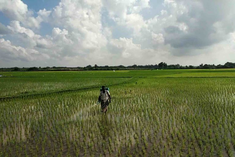 Excess application of fertilizers and pesticides contaminates groundwater which harms animals and public health. Photo by Rituparna Palit.