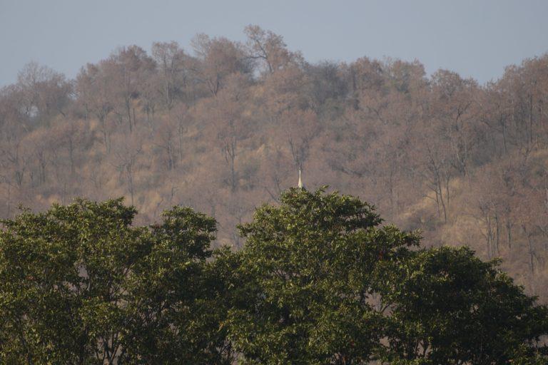 Grey heron at Kaveri river near Biligundlu. Photo by P Jeganathan/Wikimedia Commons.